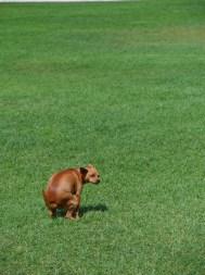 El perro debe asociar el espacio abierto con el momento de orinar o defecar
