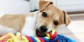 Llévale cosas propias que conozca para que no sea tan traumática la estadía en la guardería. Foto: amikooperro.com