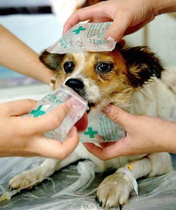 En caso de que el animal esté con golpe de calor, hay que refrescarlo rápido. Foto: Hospital Veterinario Cruz de Piedra