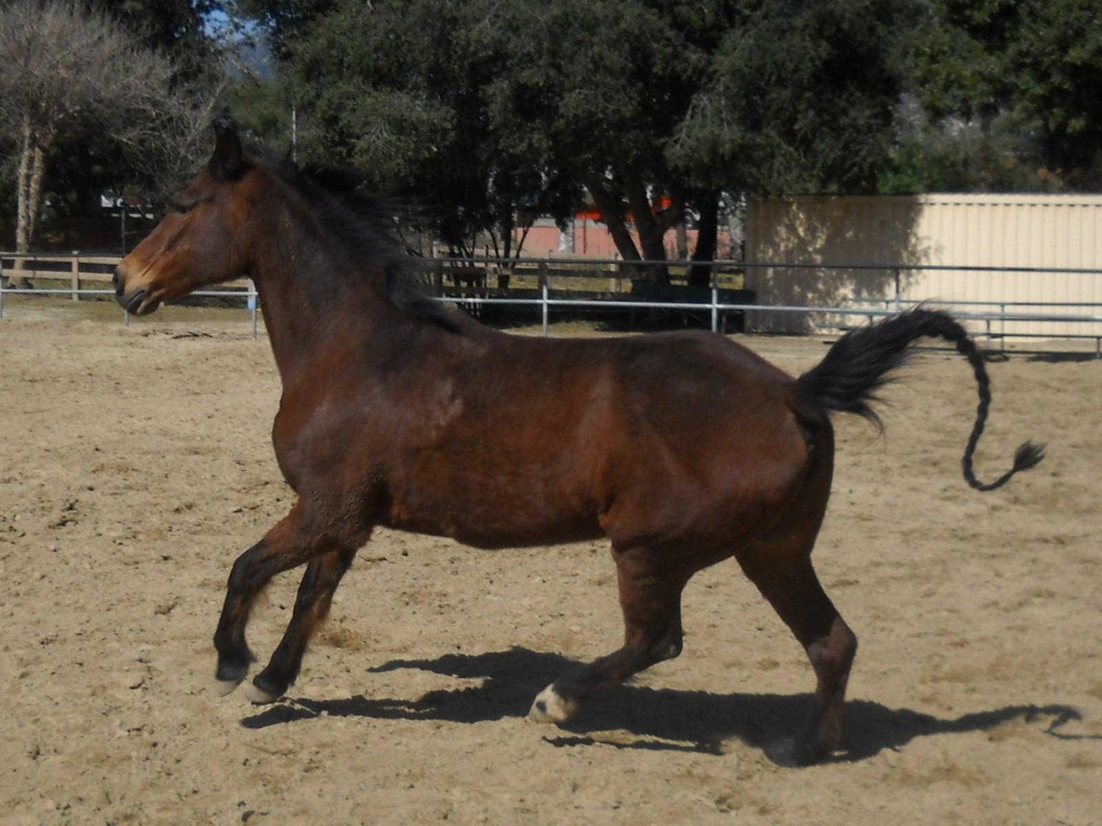 Horse.Angel_.jpg