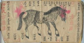 Veterinary Acupuncture History