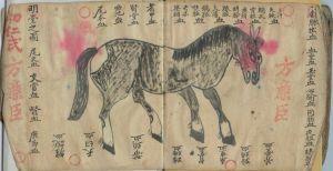 Horse - Chinese Manuscript
