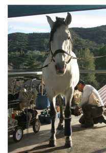 Horse.Karuso
