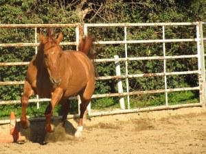 Horse.Punkin
