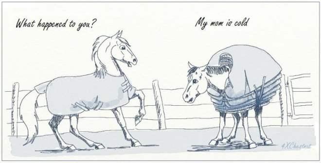 HorseColdMom