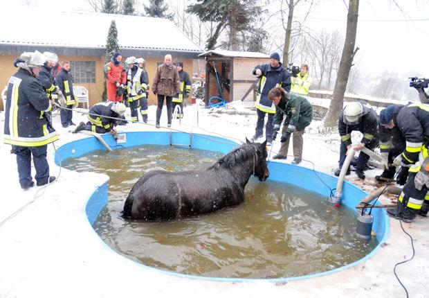horse-in-a-pool_1777220i2.jpg