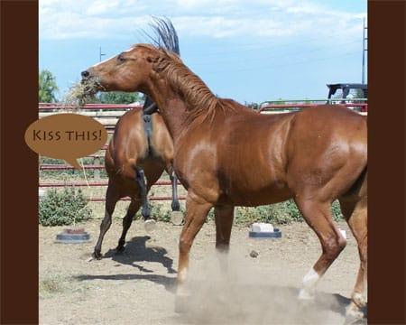 Horse.Communication.jpg