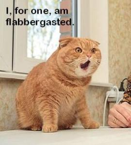 flabbergasted-cat