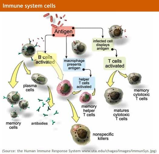 Allergies - David W. Ramey, DVM