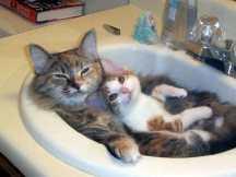 kitty_cats_by_vampfreak17