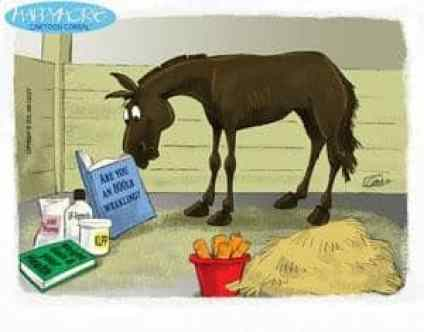 Wellness.Horse