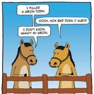 HorseTalk