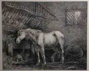 old_horse