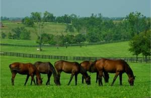 Horses, taking a break for their vitamins