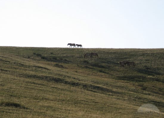 Isolated-horses.jpg