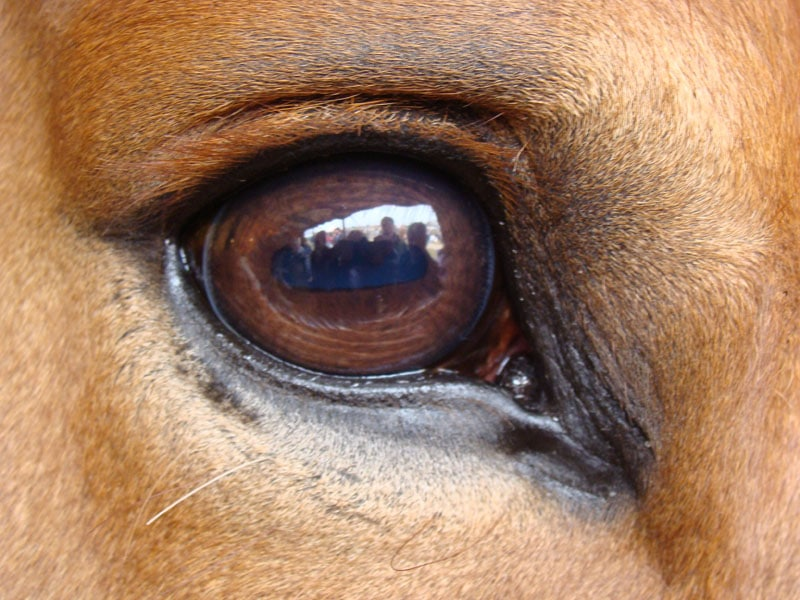 canine eye diagram right arlec fan light switch wiring the eyes have it david ramey dvmdavid dvm i was recently asked to write something about horse m happy respond such requests by way think that are really cool