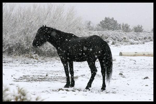 Horse-in-Snow.jpg