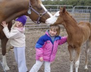 Working with Horses May Help Ease Stress in Kids – 5.1.2014