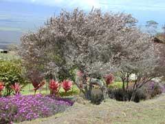 A tea tree