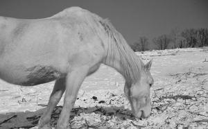 winter-horse-hero