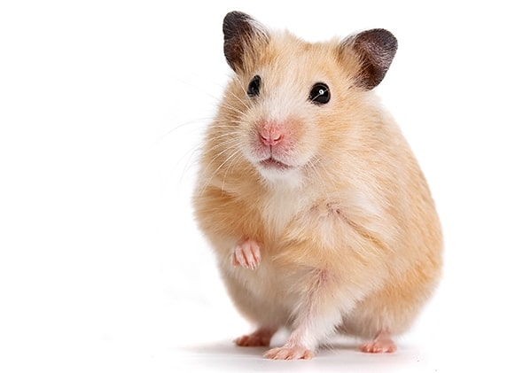 hamster-1.jpg