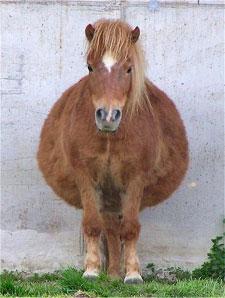 Your Horse's Thyroid Gland