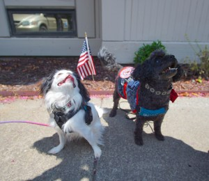 Hestia (black and white Japanese Chin) and Gigi (black mini poodle) pose in front of an American flag