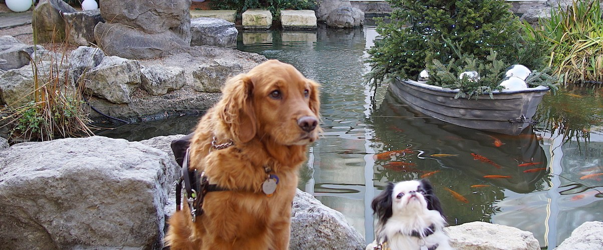 Hestia and Roger in front of the fish pond, holding very nice stays. There is a holiday tree in the background in a boat on the pond.