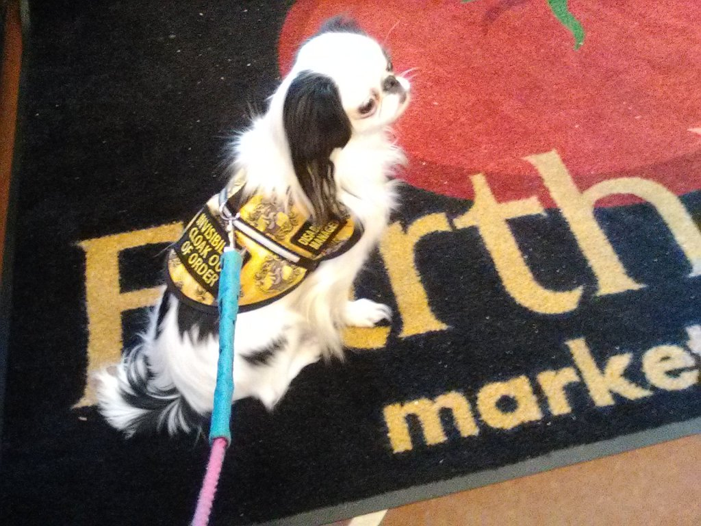 Hestia in her Hufflepuff vest sitting on an Earth Fare mat