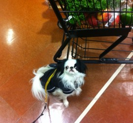 Hestia in a black raincoat next to a shopping cart filled with healthy foods like kale, oranges, and apples.