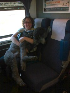 Veronica holding Ollie in her lap for deep pressure therapy on an Amtrak train.  Ollie is a big standard poodle and is flopping off of her lap.