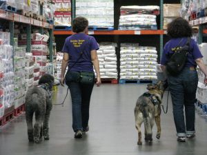 Veronica and Linden wearing PSDP t-shirts in purple and gold at Costco. Linden is partnered with Iris, a German Shepherd Dog. I am partnered with Ollie, a silver standard poodle.