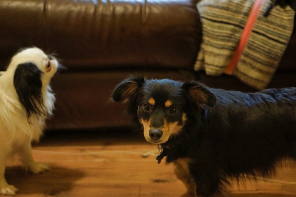 Padma looks at the camera, with Hestia slightly out of focus in the background.