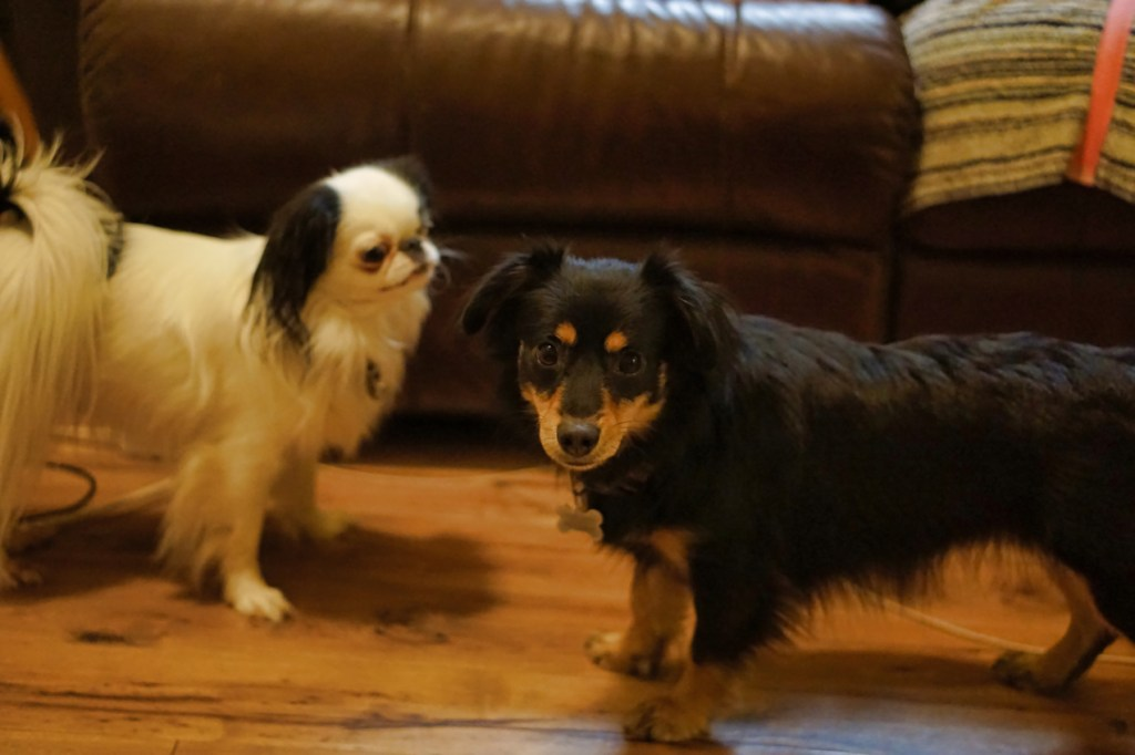 Padma and Hestia take a break from playing and look at the camera