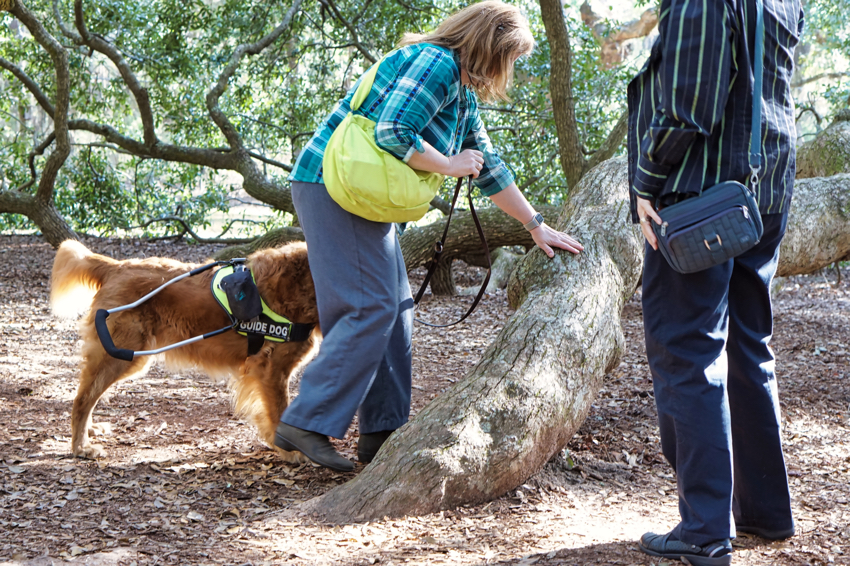 The Angel Oak is a live oak tree that is over 500 years old.  Its branches are so long and heavy that they dip down to the ground, go underground and re-root, and then come up again out from underneath.  Jenine feels the branch a couple of feet before the branch goes underground.