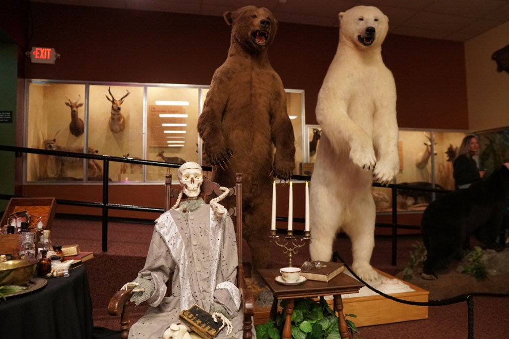 A human skeleton dressed in silvery robes next to two standing bear specimens