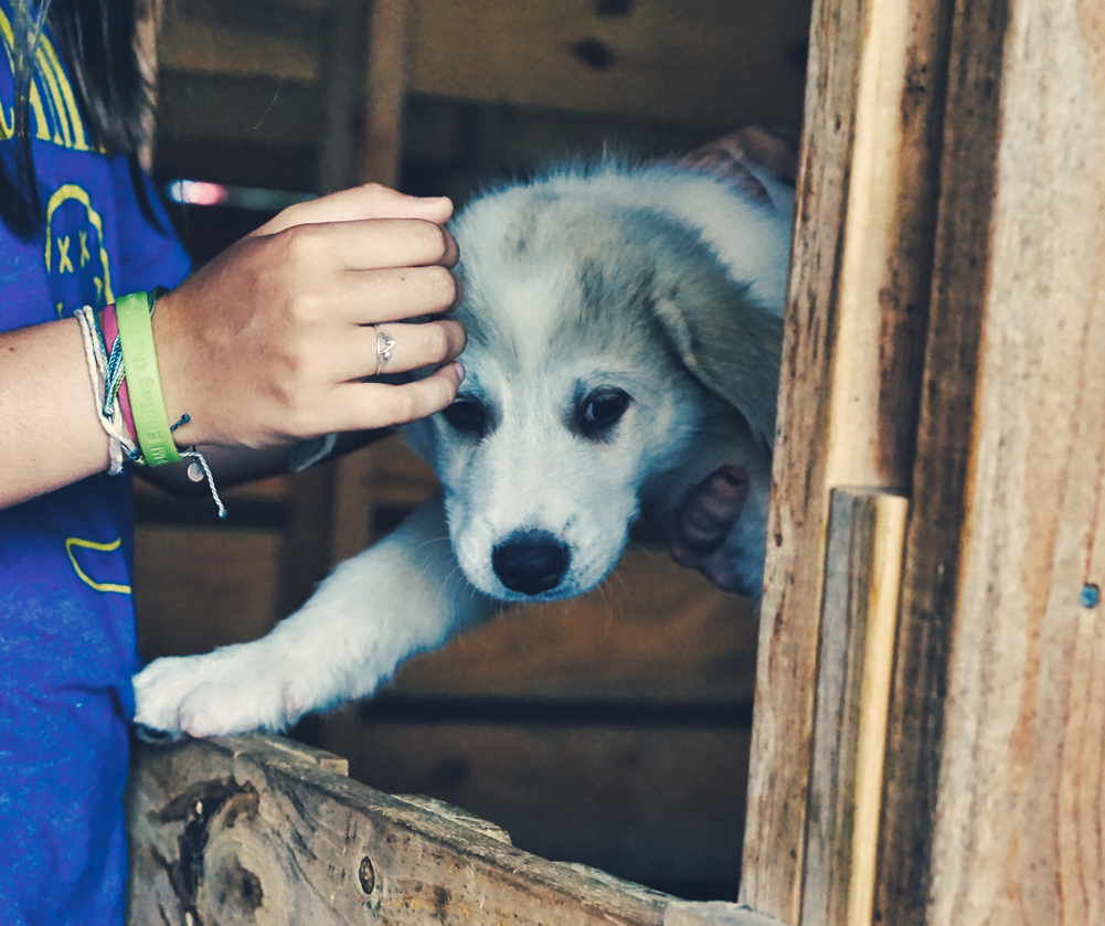 At the third farm, they had Pyranees x Anatolian Shepherd mix puppies that were 8 weeks old!  The girl petting the upheld puppy in this picture is wearing a NAMI Ending the Silence bracelet.