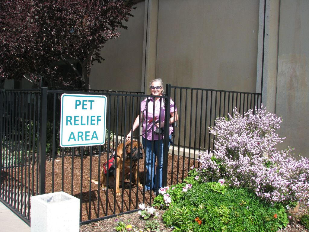 An outdoor SARA at the Sacramento, California airport.  There is a fenced area about the size of a small room with mulch, possibly with a small area of concrete sidewalk just inside the fence for wheelchair accessibility (it's hard to tell in this picture).  A 250 lb English Mastiff and his handler fit inside this pet relief area well.