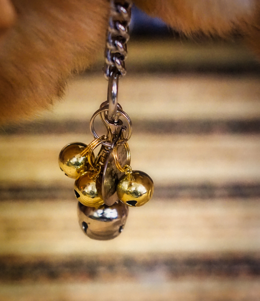 Many of the guide dogs have bells on their collars or harnesses to both help other blind or low vision folks hear where they are, and to help their handlers know what they are up to!  This picture is a close up of a cluster of bells, one large silver and three small gold ones, that were attached to the large lab's collar.