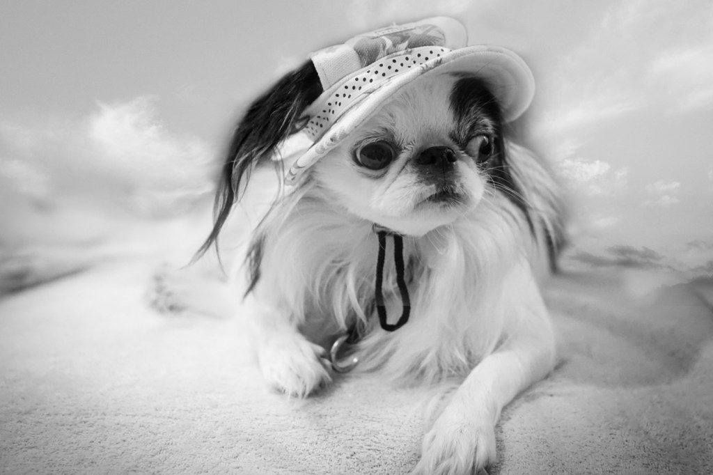 """Brad titled this shot """"The Reluctant Vacationer"""".  It is a black and white picture of Hestia looking, well, reluctant!  He has replaced the couch in the background with some sky."""