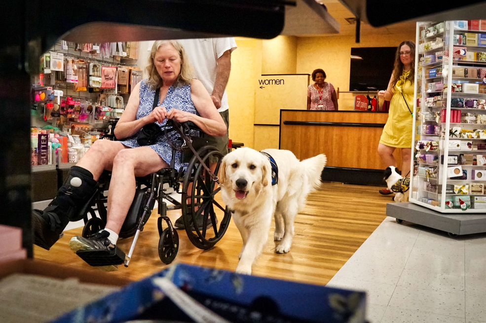 Tripper in perfect heel next to Barbara's wheelchair!