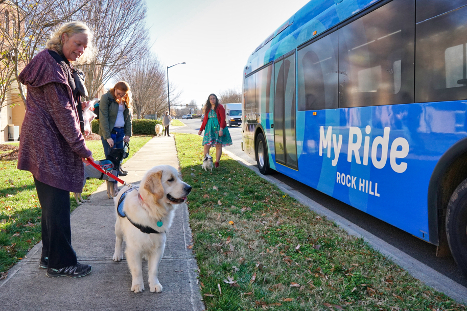 As the bus pulls away, all the dogs watch.
