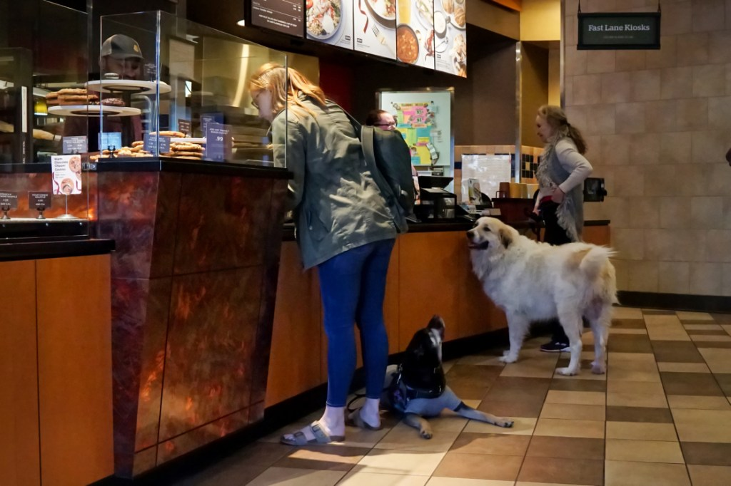 Cynthia with Kilo and Phyllis with Avalanche are ordering at Panera.