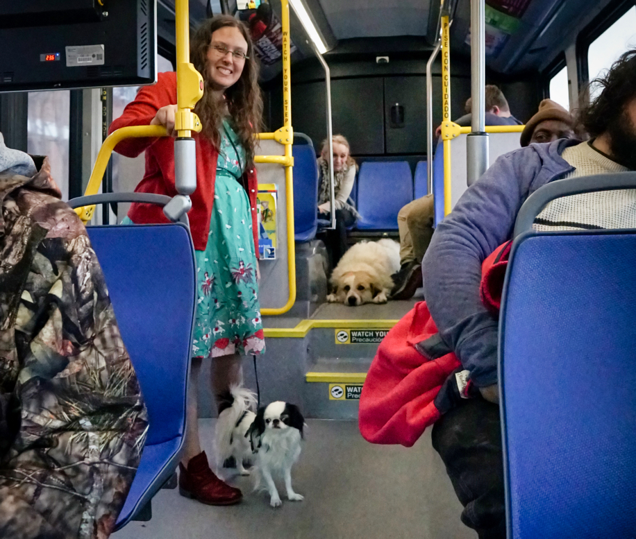 In the back of the bus on the raised portion, Avalanche lies on the floor with her head flat between her front paws.  In the middle of the bus, Veronica and Hestia stand.