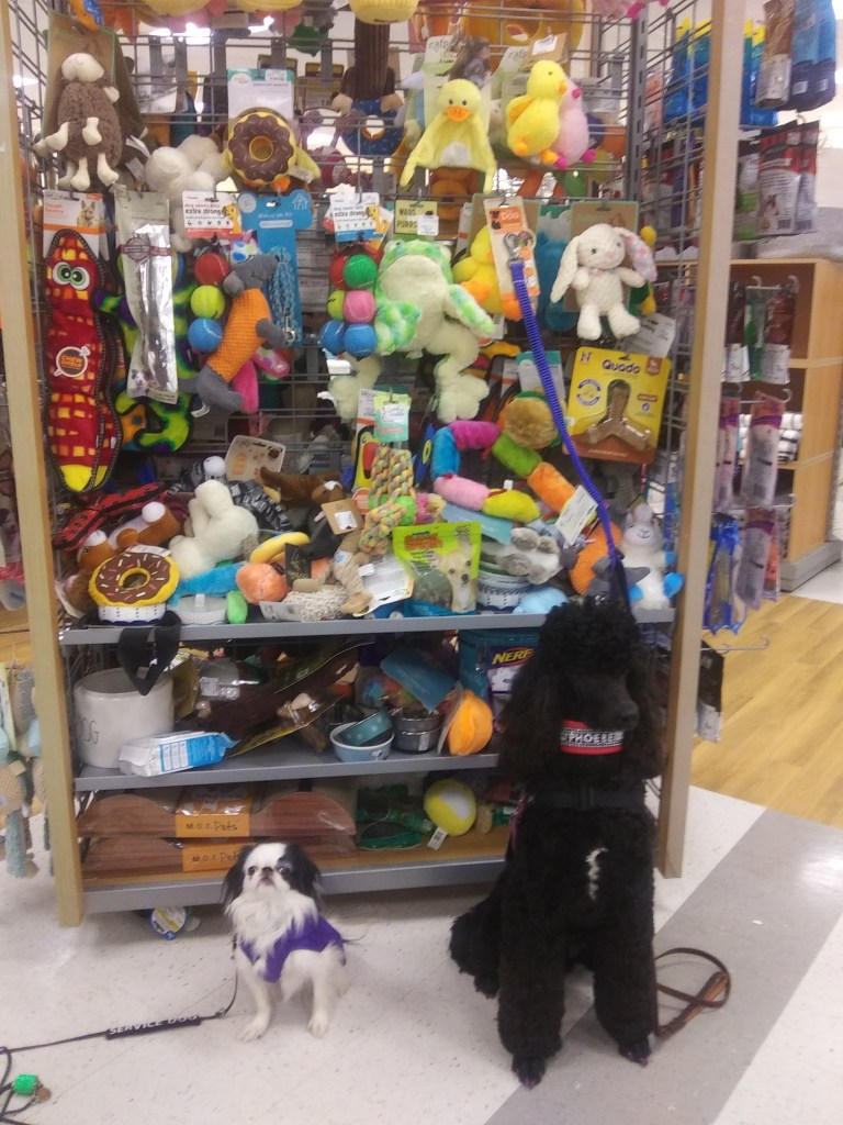 Hestia and Phoebe pose in front of a huge wall of dog toys.