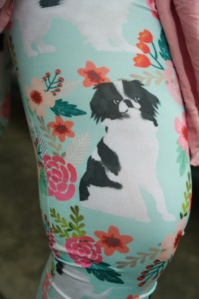 A closeup of a Japanese Chin in the leggings.