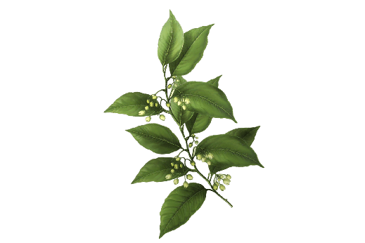 Garden Wedding Flower Graphics and Herb Drawings for Farm