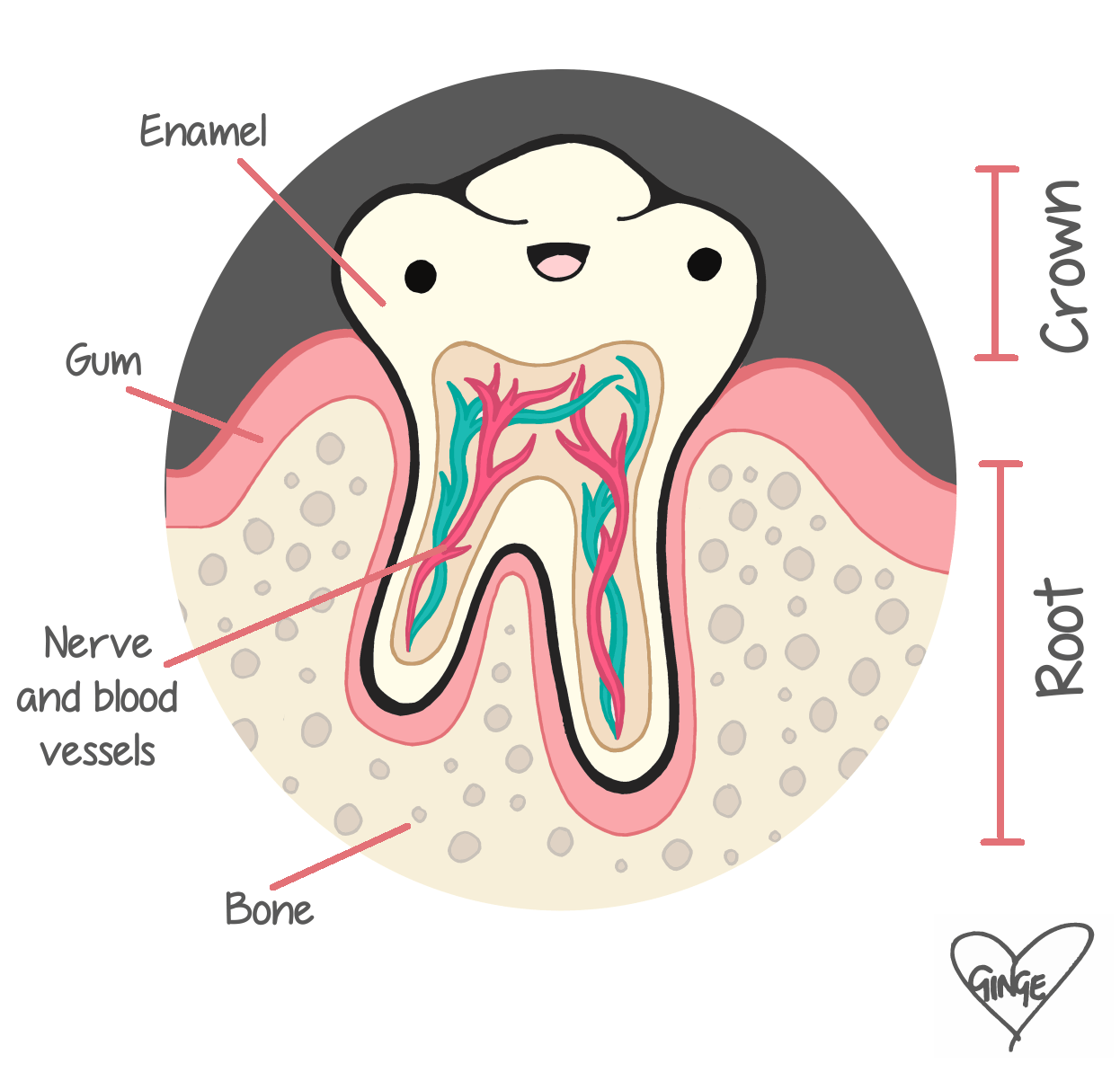 What Makes A Tooth
