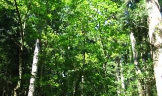平滝自然観察教育林(ひらたきしぜんかんさつきょういくりん)