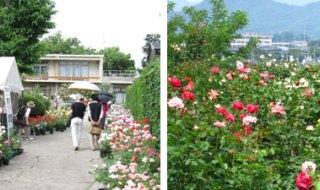 大館ばらまつりは石田ローズ・ガーデン
